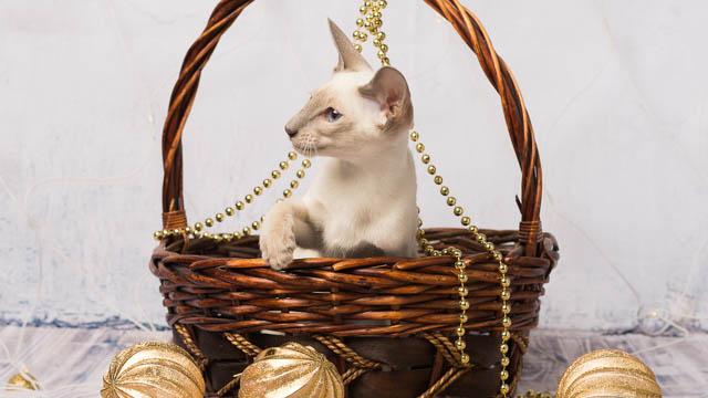 Kissa joulukoristeiden keskellä