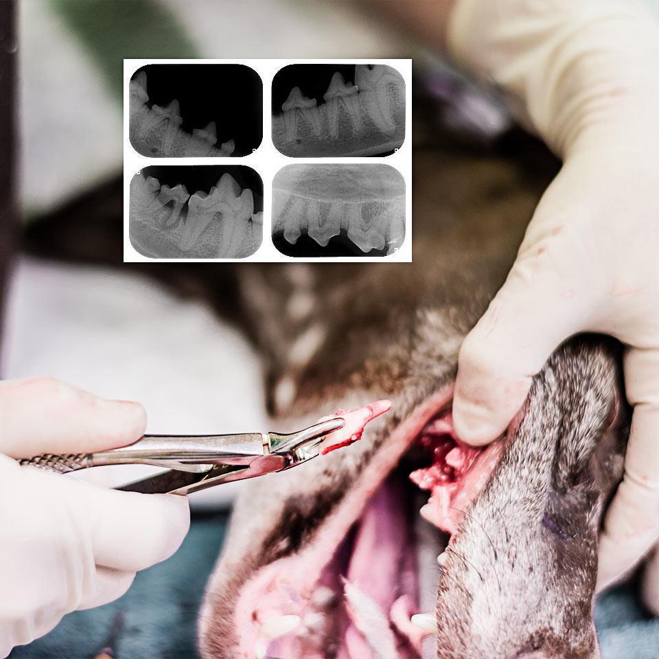 Hampaanpoisto