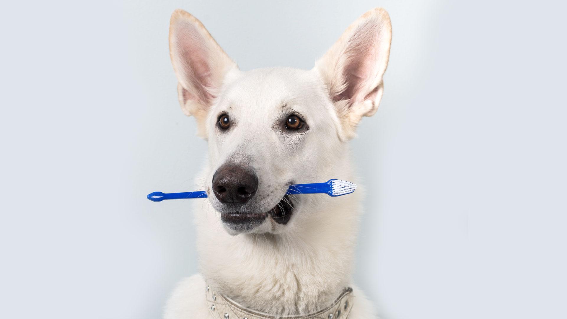 Lemmikkisi hammashoito